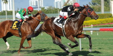 online Woodbine horse betting