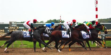 Online horse racing picks